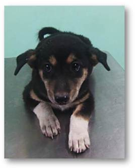 ruthor-male-1-month-old-playful-and-soon-for-adoption