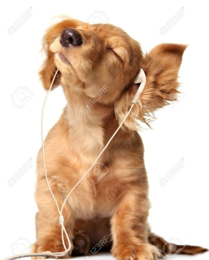 cropped-puppy-with-earpiece-21.jpg