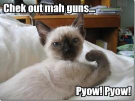strong gun cat