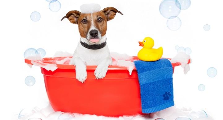 Con qu frecuencia hay que baar a los perros