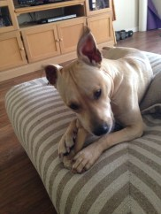 Lily needs a home!