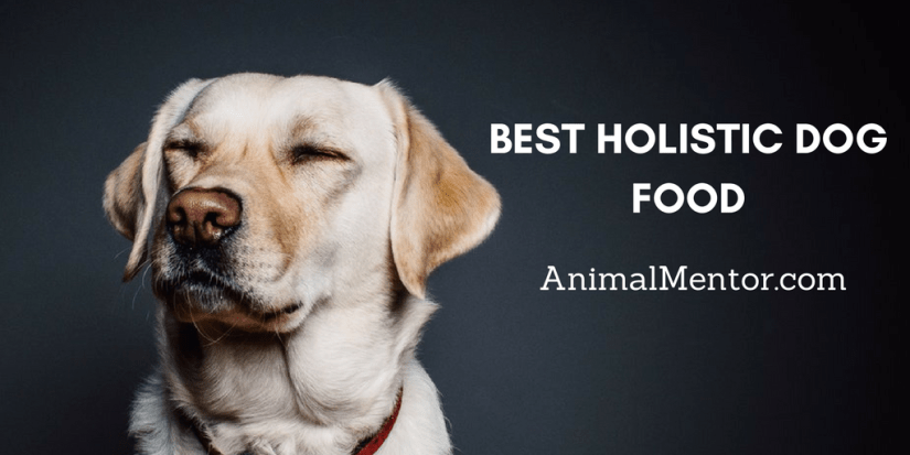 Best Holistic Dog Food