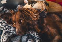 Best Dog Dewormer