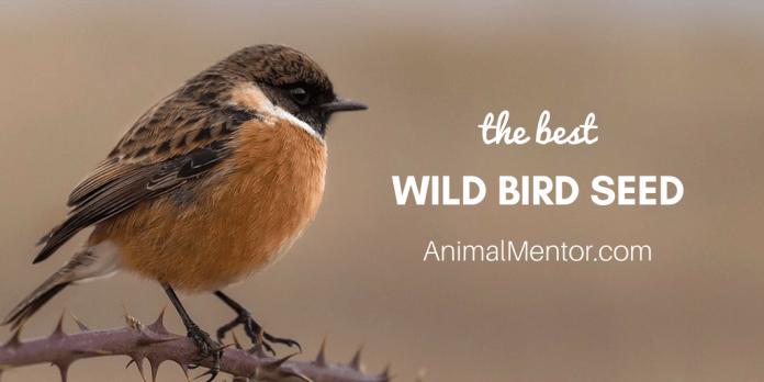 Best Wild Bird Seed