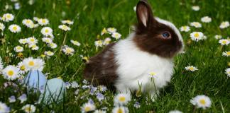 Best Rabbit Hutch