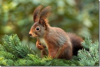 La vie secrète des écureuils