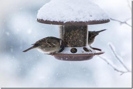 Deux oiseaux à la mangeoire sous la neige