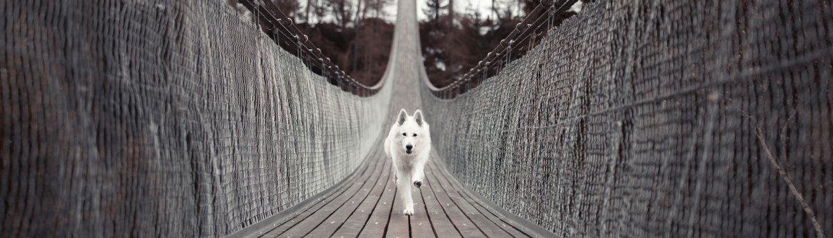 Animal Nerd - Dog Running
