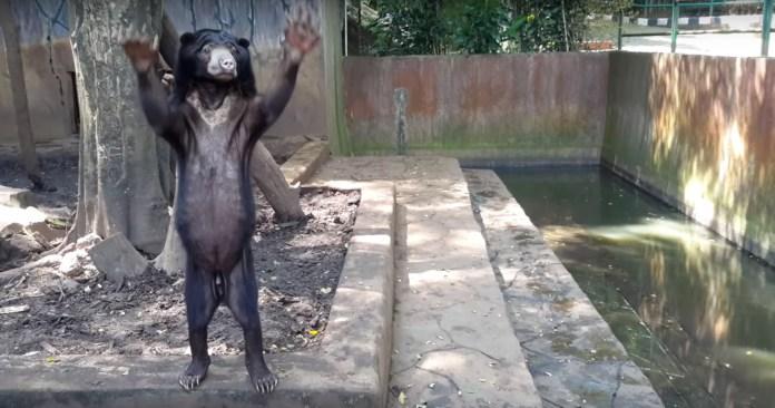 Developing Animal Welfare Standards In Indonesian Zoos