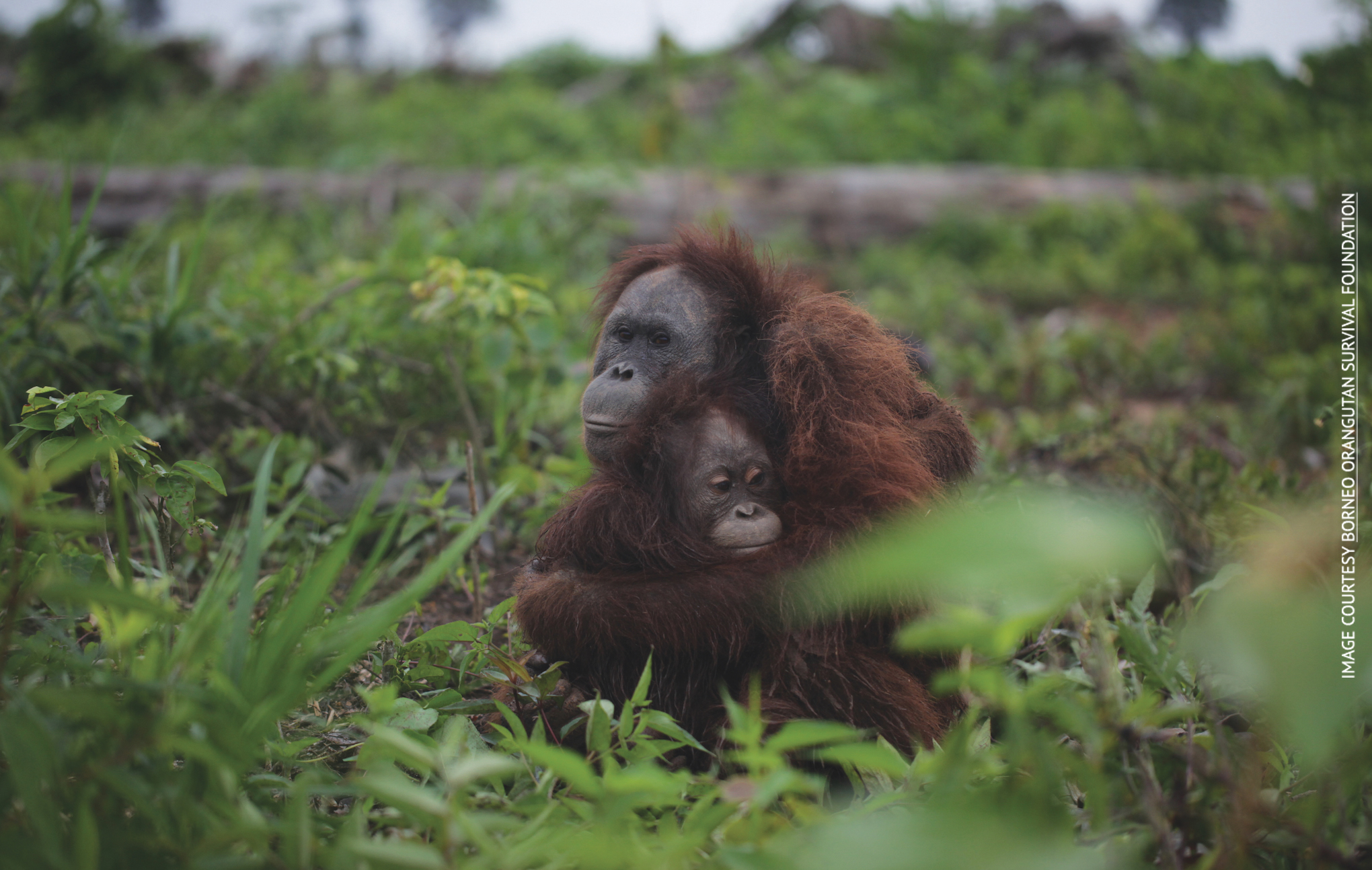 Palm Oil and Animal Rights How you can combat the