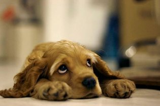 a-cute-dog-photo