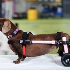 Wheel Chairs For Dogs Lightweight Travel Beach Wheelchairs When Should You Consider One Welcome To The Have Really Improved In Recent Years And There Are Many More Brands Choose From Now These Can Be A Great Addition Your Dog S