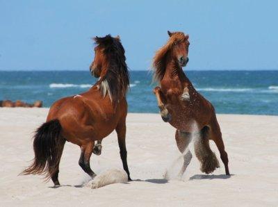 Kuda yang Kren | Animal Planet