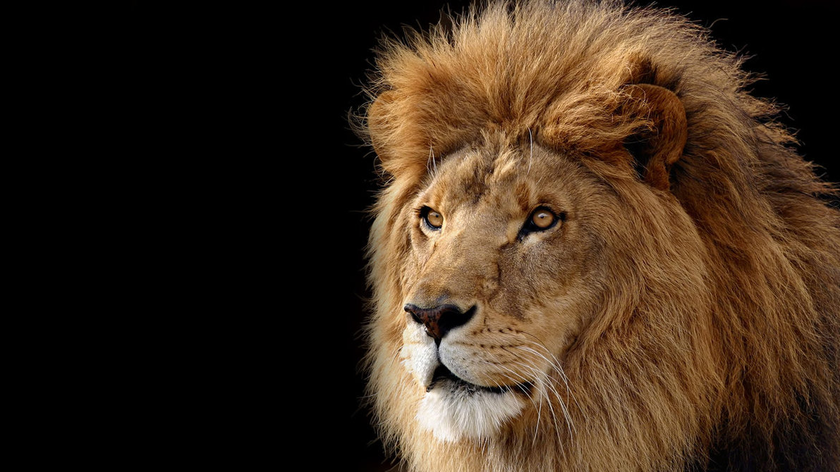 Binatang Buas  Animal Planet