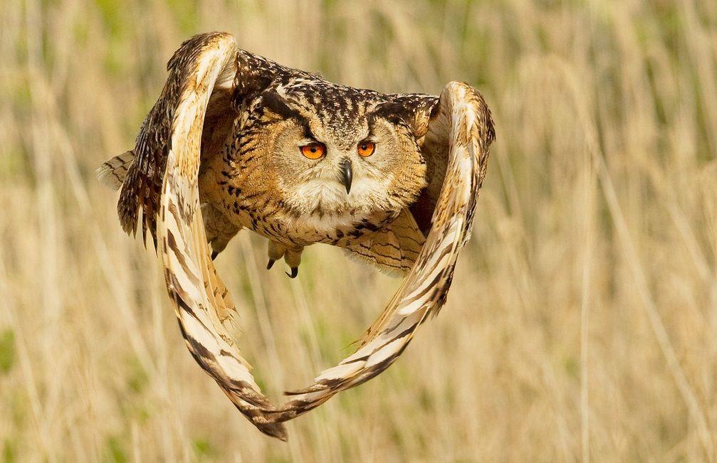 Burung burung Cantik  Animal Planet