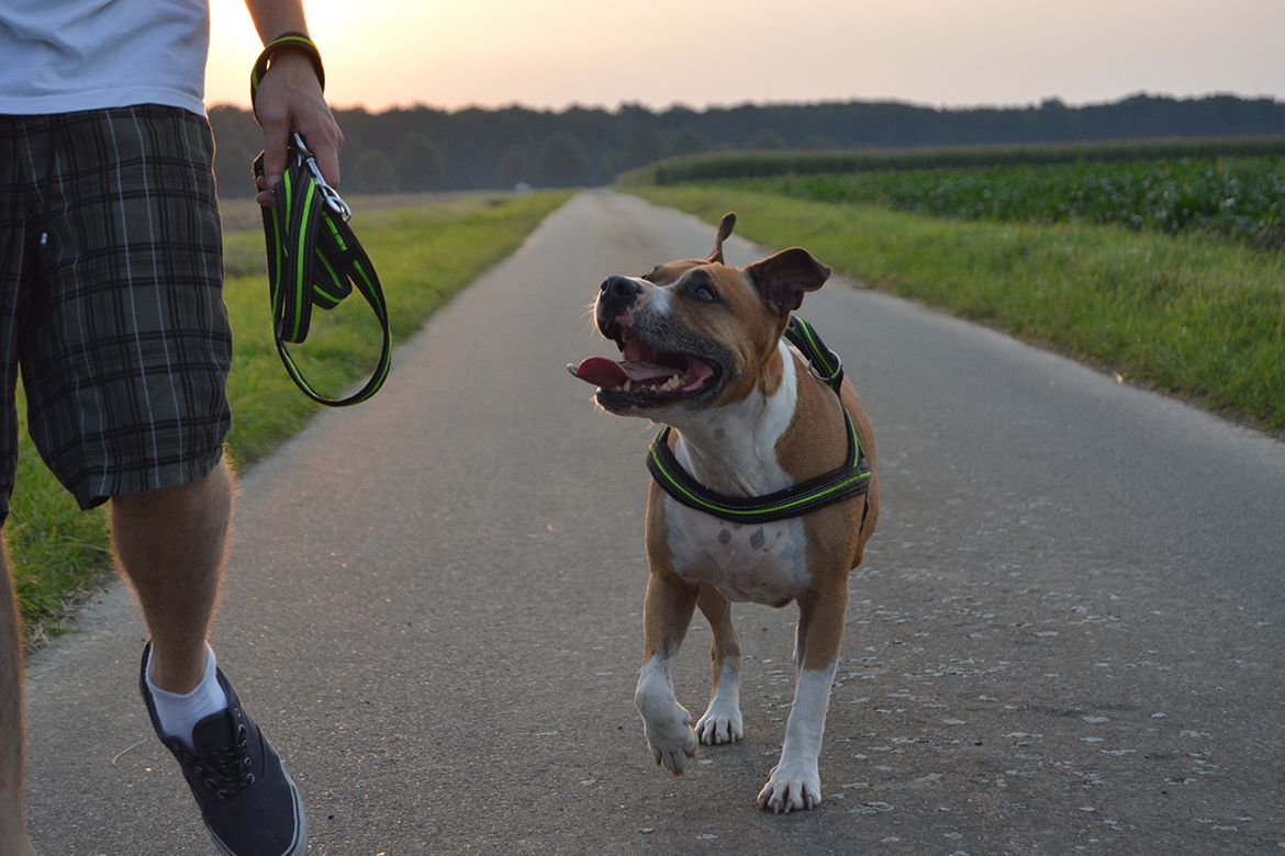 2-mighty-paw-hands-free-dog-leash-compressor