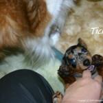 Tickles!