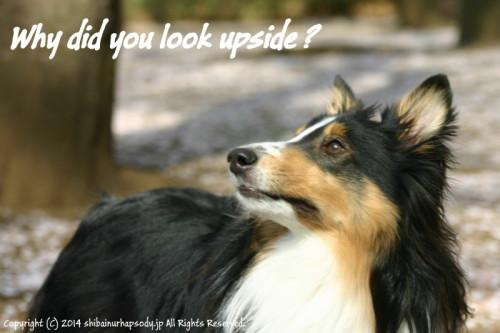 look upside