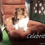 Celebrity dog.