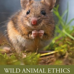 book cover of Kyle Johannsen's Wild Animal Ethics