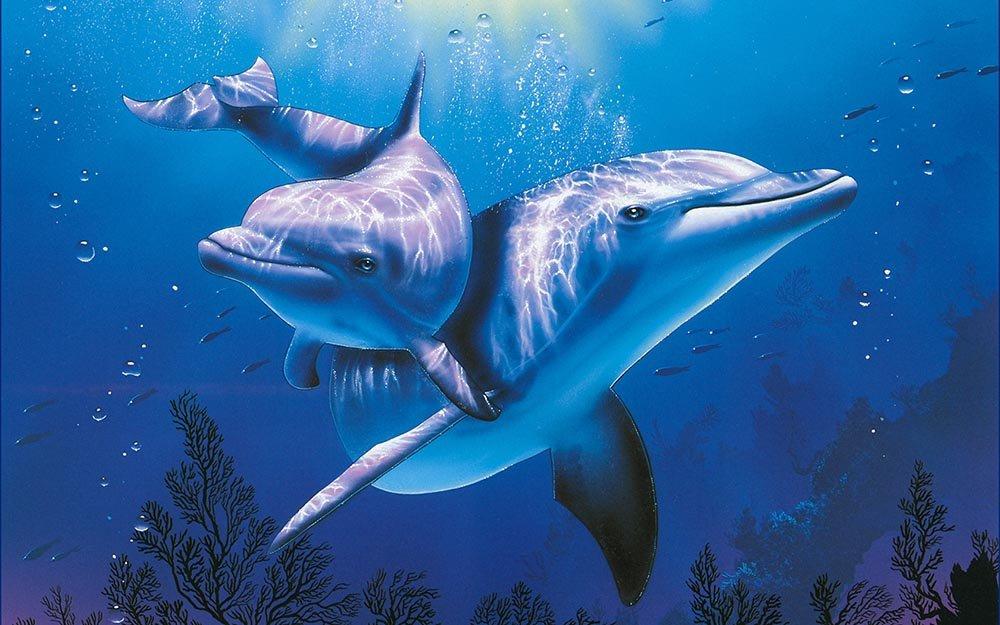 Многообразие видов дельфинов