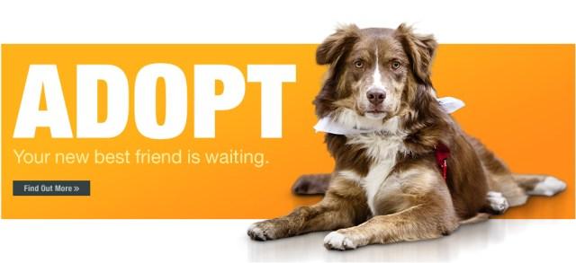 Pets For Adoption Animal Refuge Center Inc Forever Homes