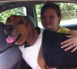 Copper was at the Animal Refuge Center for three long years. We think he started to despair of finding his Forever Home, as this year he began showing signs of boredom and behavioral problems. He finally found his family, and here we see them on their way home, July 28, 2015.