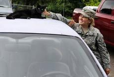 CPT. Cheryl Abbate greets one of the cats resting on a car Thursday at the Animal Refuge Center Inc. near Vine Grove.