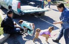 Peggy Brown, left, and Jack, dressed as a dragon, and Nicole Brown and Penelope, wearing a butterfly outfit, join others Saturday at the Playful Paws Pup-Tacular Harvest Celebration.