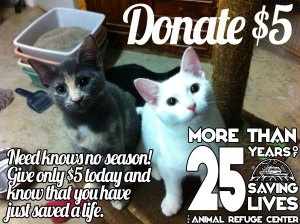It's Kitten Time! Need Knows No Season. Give Now!