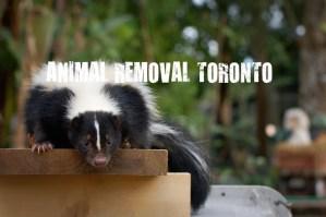 Animal Removal Toronto - Skunk Removal