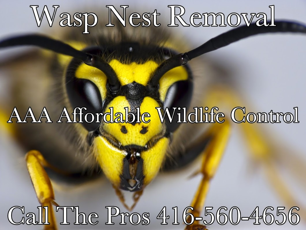 Animal Removal Toronto - Animal Removal, Animal Removal Services, Animal Removal Brampton, Animal Removal Mississauga, Animal Control Toronto,