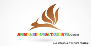 Animal Removal Toronto - AAA Affordable Wildlife Control