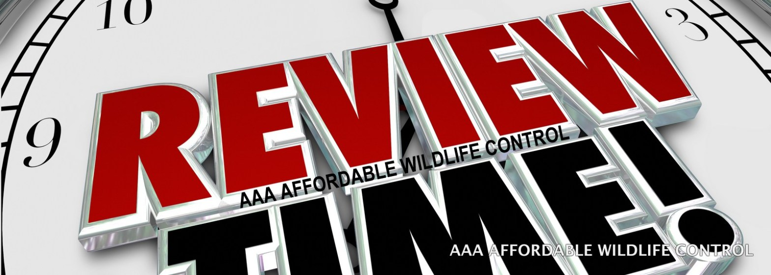 AAA Affordable Wildlife Control Reviews - Wildlife Removal Toronto Reviews