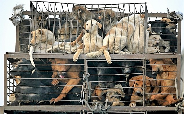 Dog meat trade, dogs