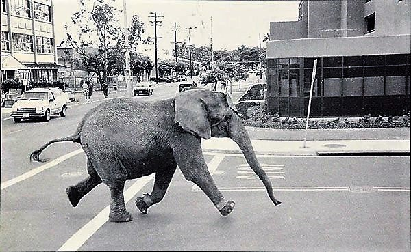 Remembering Tyke the circus elephant.