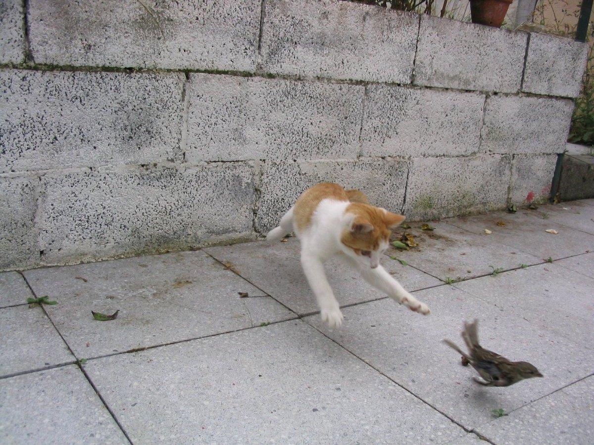 cat, bird, cat chasing bird