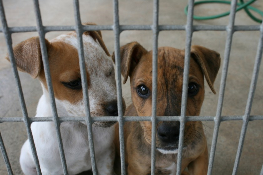 puppies, unwanted, stray, dog pound