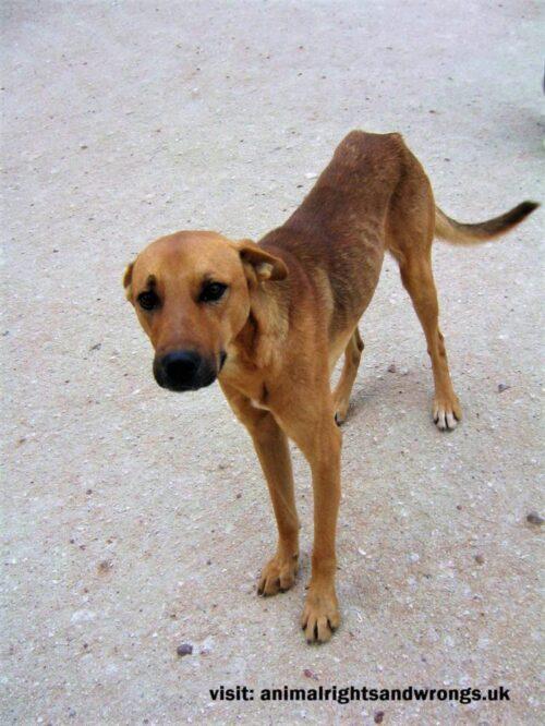 Animal suffering, thin dog, dog abuse