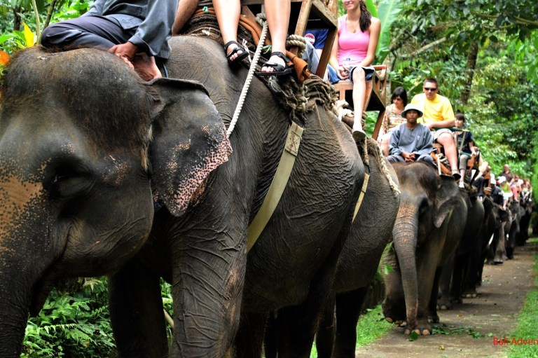 Tourist elephant riding