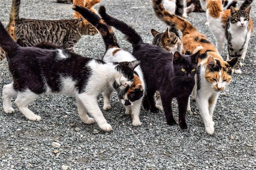 Cats, feral, colony, cat cruelty, animal welfare