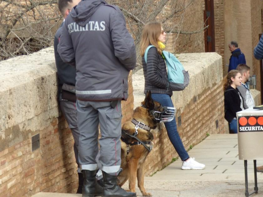 Security dog, muzzled, animal ethics