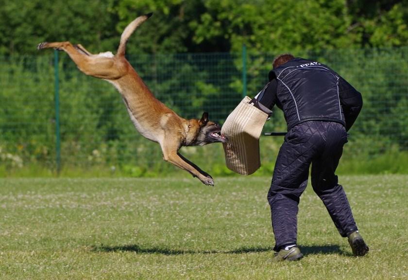 dog attack training