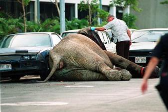 Tyke, elephant, circus, death of Tyke