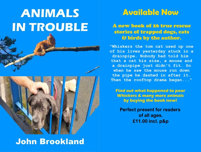 Advert for Animal in Trouble