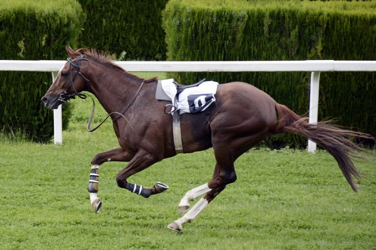 Riderless race horse