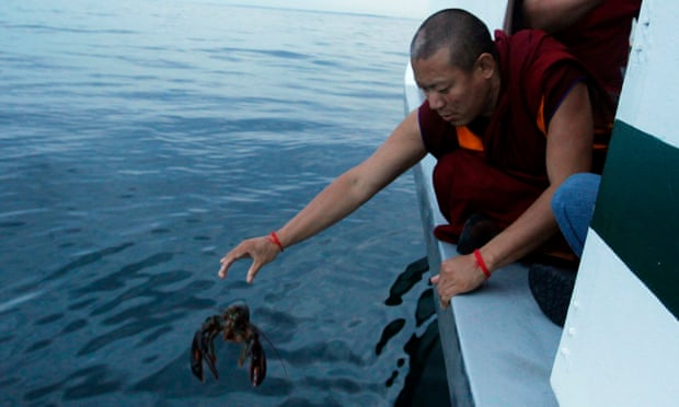 Fang Sheng, releasing lobster