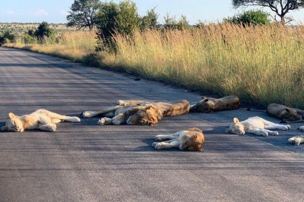 Wildlife take advantage of Coronavirus hiatus