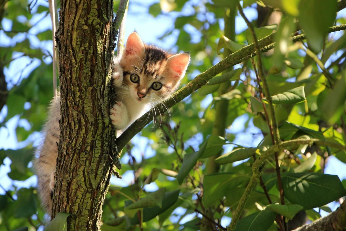 Kitten up tree