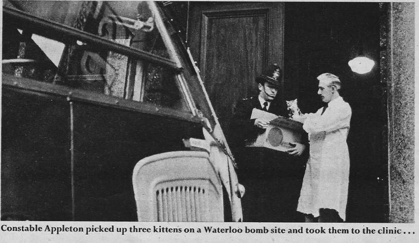 1950's photo of front door to RSPCA headquarters.